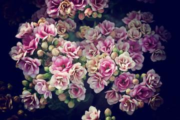 Flower vintage blur and little noise.