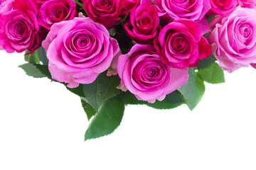 bouquet of pink and magenta fresh roses and leaves border isolated on white background