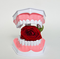 Dental jaw and rose flower, dentist day celebration picture