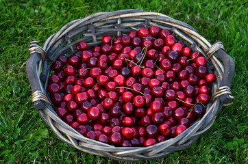 cherries on the flat basket