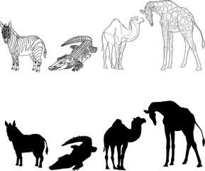 illustration with the image of zebra, giraffe, crocodile and camel, made contours and silhouettes. black and white.