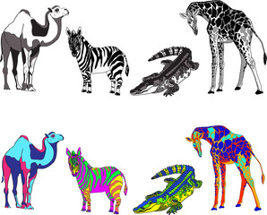 illustration with the image of zebra, giraffe, crocodile and camel, made black, white and bright different colors