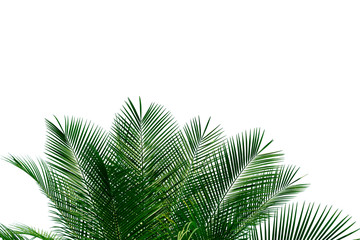 palm leaves with copy space on white background