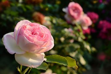 Blumen 595