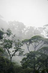 mglisty las dżungli - 115454886