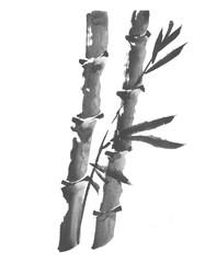 bamboo ink hand drawn illustration