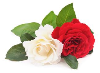 Witte en rode roos.