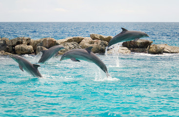Jumping dolphins in Curacao Wall mural