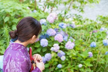 紫陽花を眺める着物姿の女性