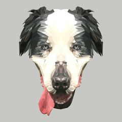 Bernese Mountain Dog animal low poly design. Triangle vector illustration.