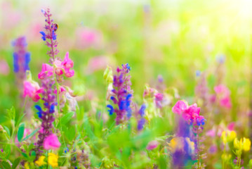 Summer Nature Background - Blur Bright Flowers Wallpaper