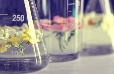 Fresh flowers in test tubes, closeup
