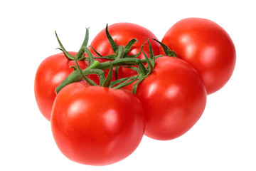 Wall Mural - bright colorful tomatoes on the gnarled branches. isolated on white background without shadows.
