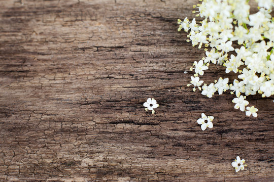 Copyspace on wooden background with white flowers. Old wood with gentle spring motives of elderberry