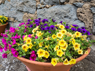 Maceta con flores de colores OLYMPUS DIGITAL CAMERA