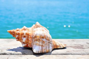 conch on a wooden pier