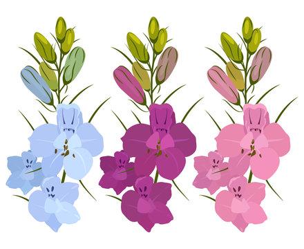 Set of 3 flowers. Blue, purple and crimson. Delphinium flowers.