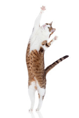 Katze Muskelschwund Hinterbeine