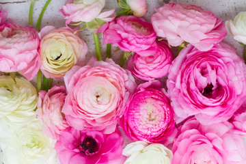 Pink and white fresh ranunculus flowers close up background