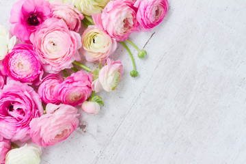 Pink and white fresh ranunculus flowers on white wooden background with copy space