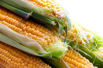 beautiful ripe grain corn on the leaves