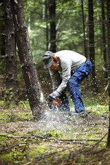 Sweden, Vastergotland, Oglunda, Man cutting trees in forest with chain saw