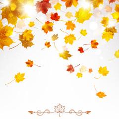 Autumn Falling Maple Leaves
