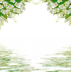 White jasmine flower.