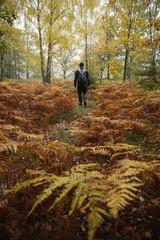 Sweden, Skane, Soderasens National Park, Klova Hallar, Mid adult man hiking in forest