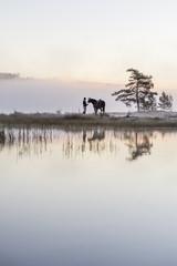 Sweden, Vastmanland, Bergslagen, Hallefors, Grythyttan, Bovik, Young woman standing with horse on lake shore