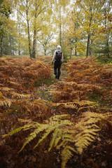 Sweden, Skane, Soderasens National Park, Klova Hallar, Mid adult woman hiking in forest