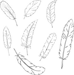 Set of white feathers on white background. Cartoon sketch drawn by ink. Hand drawn vector illustration.