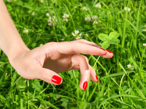 Beautiful female hand with red nail holding four leaf clover.