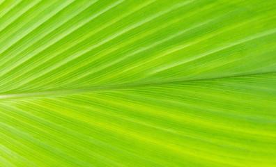 Plant green leaf, taro leaf