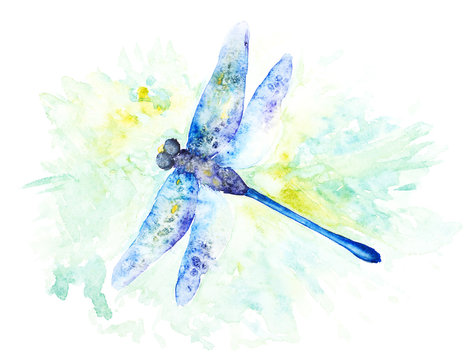 Bright Watercolor Illustration of Colorfull Dragonfly. Hand Drawn Image of Insect Isolated on White Background.