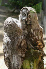 Couple of owls living in the zoo