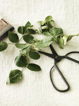 Sweden, Vastergotland, Scissors and rose leaves on table
