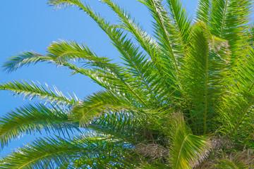 ヤシの木の背景画像