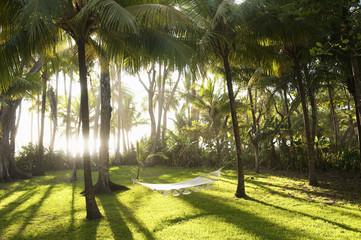 Costa Rica, Santa Teresa, Hammock between palm trees