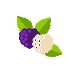Purple and White Mulberries Icon