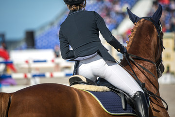 Equestrian, Horse Jumping, Show Jumping themed photo