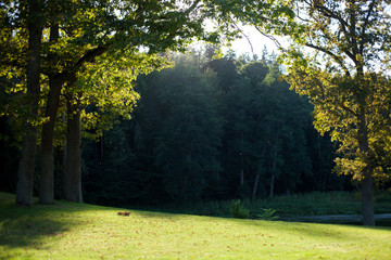 Sun shining through trees in the park