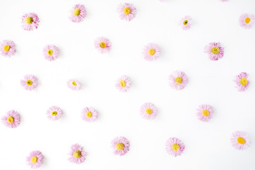 chamomile pattern on white background. flat lay, top view