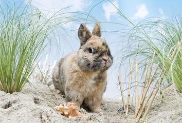 Kaninchen in den Dünen