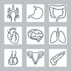 Human internal organs line icons set. Vector illustration
