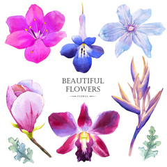 Botanical illustration with realistic tropical flowers and leave
