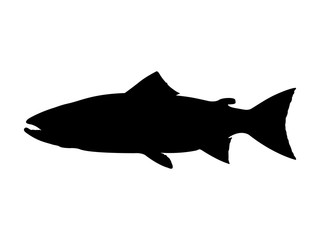 Atlantic salmon silhouette. Vector illustration.