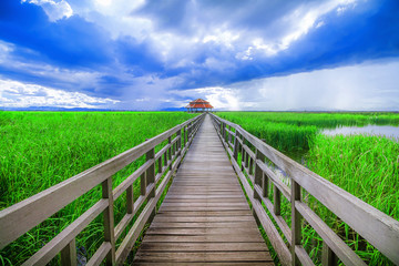 Sam Roi Yot Freshwater Marsh is a place for ecotourism. It is located in Khao Sam Roi Yot National Park. Prachuap Khiri Khan, Unseen Thailand.