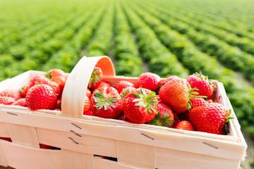 Korb voller frischer Erdbeeren