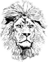 Door stickers Hand drawn Sketch of animals Lion with big mane